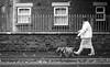 2017_289 (Chilanga Cement) Tags: fuji fujix100f xseries x100f street streetphotography bw blackandwhite monochrome sidewalk pavement woman lady dog dogd pup puppy puppies bricks railings window windows walk walking