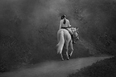 Horses make a landscape look beautiful (Christina's World aka Chrissie Bee) Tags: nature exotic evening horse white whitehorse foggy fog monochrome mood monotone blackandwhite bw light longhair woman walking trot romantic road countryroad california socalifornia sandiego scenic artistic animal candid dark dusk exoticimage girl landscape neighborhood outdoor portrait people equestrian realpeople streetphotography textures unitedstates youngwoman youngadult skancheli