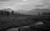 Tuolumne Meadows (bingley0522) Tags: leicaiiic voigtlandercolorskopar50mmf25 tmax100 hc110h epsonv500scanner tuolumnemeadows tuolumneriver yosemite yosemitenationalpark overcast autaut