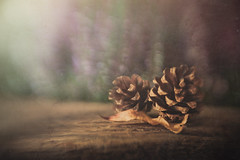 Pinecones (Ro Cafe) Tags: autumn lensbaby stilllife sweet50 sweet50macro pinecones wood leaf bokeh selectivefocus blur textured nikond600