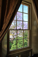 Room with a view. (Ian Ramsay Photographics) Tags: room view glenalvon historic house campbelltown newsouthwales australia georgian townhouse flowering jacaranda airds historical society inspection city council lithgow street michaelbyrne built