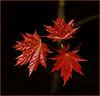 DSC_6713 copy (FMAG) Tags: kpn kampinoskiparknarodowy polska poland wiosna spring 7dwf leaves leaf