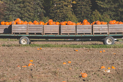 Pumpkin Wagon (A Great Capture) Tags: farmland whittamore's harvest fall autumn halloween ontario markham field patch farm wagon pumpkin pumpkins agreatcapture agc wwwagreatcapturecom adjm ash2276 ashleylduffus ald mobilejay jamesmitchell on canada canadian photographer northamerica torontoexplore automne herbst 2017