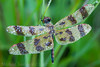 Halloween Approaches (Shadows in Reflection) Tags: halloweenpennant dragonfly dew washtenawcounty michigan celiithemiseponina spiderweb heart happyhalloween