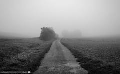 A foggy morning in September 4. (andreasheinrich) Tags: landscape path bushes fields fog morning autumn september blackandwhite blackandwhitephotos misty cold germany badenwürttemberg neckarsulm dahenfeld deutschland landschaft weg büsche felder nebel morgen herbst schwarzweis neblig kalt nikond7000