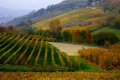 Vineyards in Piemonte (annalisabianchetti) Tags: vineyards vigneti autumn autunno landscape paesaggio rural countryside colors italy piemonte langhe