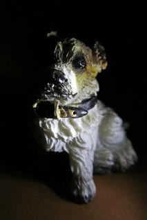 dog in the dark ;)