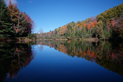 Muskoka River, Ontario (alex_7719) Tags: water trees river serene ontario canada muskoka muskokariver fall деревья река онтарио канада осень вода мускока autumn