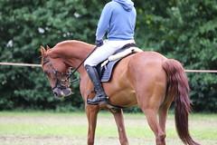 _MG_5810 (dreiwn) Tags: ridingarena reitturnier reiten reitplatz reitverein reitsport ridingclub equestrian showjumping springreiten horse horseback horseriding horseshow pferdesport pferd pony pferde tamronsp70200f28divcusd