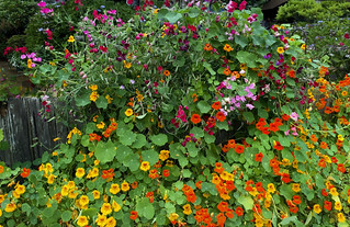 Flowers Profusion