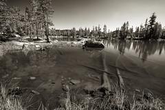 Spider Lake 3_1780 (hkoons) Tags: desolationwilderness loonlake spinderlake california loon sierras blue lake landscape mountains outdoors outside rocks sunshine trees water