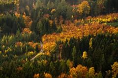 Rudawy Janowickie sunrise (PiotrHalka) Tags: poland rudawy janowickie sunrise nikon nikkor autumn jesień jesien polska sudety karkonosze góry forest las mist mgła fog tree wood sky sunset