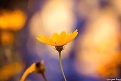 Life is full (gusdiaz) Tags: canon canonphotography 60mm macro dof bokeh depthoffield colorful flor flores nature naturephotography beautiful sunrise amanecer gorgeous autumn fall otoño colorido naturaleza