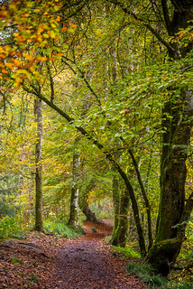 Ancient woodlands in autumn