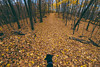 Cortana at Maplewood State Park (Tony Webster) Tags: cortana maplewoodstatepark minnesota october autumn dog fall statepark pelicanrapids unitedstates us