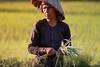 Siem Reap, Cambodia (Aicbon) Tags: verde siemreap siemriep cambodja angkor ricefields arrozal arrossar rice camps campos trabajador trabajadores workers farmers pages arros green luz light cambodia camboya kampuchea khmer jemer ក្រុងសៀមរាប angkorregion siemreapprovince asian asia indochina indoxina southeastasian sudestasiàtic sudesteasiatico cambodge cambogia camboja jiǎnpǔzhài 柬埔寨 kamboçya kambodia 캄보디아 kamboḍiyā कम्बोडिया kambodiya kambodja kambodscha kambodsja kambodža камбоджа kambodża камбоџа kambodzsa kamboja καμπότζη kemboja կամբոդիա