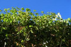 Bar Vinas (sablott) Tags: spain galicia europe architecture backlight sky ribeirasacra lugo osaviñao plants building