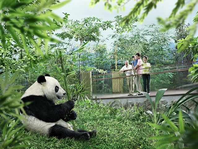 ジャイアントパンダに会える!リバーサファリ(海外の動物に出会えるオプショナルツアー)