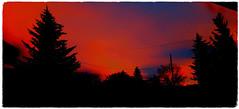 Fiery sunrise (darletts56) Tags: trees brilliance red crimson silhouette twilight fire sky