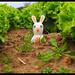 Raving Rabbids . le lapin des salades