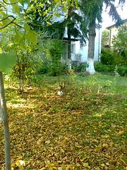 Fotografie51459p (chicore2011) Tags: littlepark calicocat apartmentbuildings