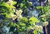 DSC_6541 (FMAG) Tags: kpn kampinoskiparknarodowy polska poland wiosna spring