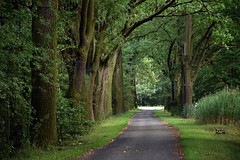 summer moods (JoannaRB2009) Tags: summer mood green path alley avenue nature road tree trees oak oaks miliczponds stawymilickie lowersilesia dolnyśląsk dolinabaryczy riverbaryczvalley polska poland