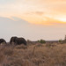 Swaziland - Elephants & sunset (Hlane National Park)