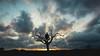 King of nothing (John Walters vl) Tags: clouds cloud nube nubes tree arbol landscape paisaje yo me portrait retrato skyscape field campo monte mountain mountains montañas nature naturaleza love happy sky beauty animals wild wildlife woods