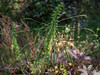 Seed Pods (aweiss.sf) Tags: 1250mm flora hoosier indiana midwest olympus omdem5 plants seedpods springmillstatepark