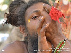 2017-02b Shivratri Mela (60c) (Matt Hahnewald) Tags: matthahnewaldphotography facingtheworld character face eyes facialexpression eyecontact fullbeard pipe smoke smoking chillum barechested marijuana hashish ganja bhang charas bodylanguage gesture bothhands consent rapport emotion spiritual religious traditional cultural holy mela sadhu bhavnath asian male adult young man picture photo faceperception physiognomy primelens street portrait closeup color posing authentic stoned recreational dreadbun gujarat hinduism 4x3 horizontal indian junagadh nikkorafs50mmf18g nikond3100 outdoor seveneighthsview shivratri topbun travel westernindia 50mm oneperson