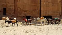 JORDANIA (Grace R.C.) Tags: animal donkey burros jordania petra