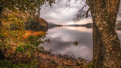 The Lakes....Coniston X (Einir Wyn Leigh) Tags: landscape lake uk england light autumn trees woodland nature love sunlight gold orange green colorful
