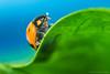 Beauty (Damith Danthanarayana) Tags: macro reverse bug beauty small riverse ring 50mm g