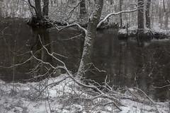 scent of winter (Mindaugas Buivydas) Tags: lietuva lithuania color winter february tree trees cold frost snow forest river mood moody sadnature dubinga mindaugasbuivydas