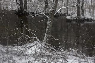 scent of winter