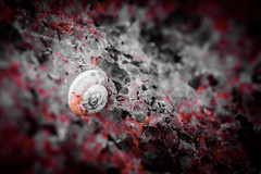 (C-47) Tags: selective composition art animal meaningful artistic artistique amateur canon100mml28 red flickr feel feelings dark details effect eos shapes light macro macrolife closeup three