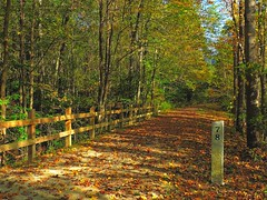 Fall Fencing (2) (Trains & Trails) Tags: fayettecounty pennsylvania fencing wooden path trail greatalleghenypassage fall autumn october nature outdoors woods woodlands forest trees leaves foliage laurelhighlands milepost maker 78