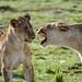 Mara Safari-2395.jpg