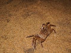 Crab (Siva301in) Tags: canon canonixus95is canonixus canonixus95 siva301in sivakumarbalasubramanian