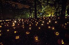 Happy Halloween (Jersey JJ) Tags: happy halloween field of screams jack o lanterns scary pumpkins night boo happyhalloween allhollowseve