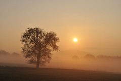 luck (Uli He - Fotofee) Tags: ulrike ulrikehe uli ulihe ulrikehergert hergert burghaun nikon nikond90 fotofee plätzer meinweg nebel november morgensonne sonne sonnenlicht warmeslicht sonnenschein bäume feld felder licht schatten