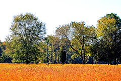 012 Soybean Field (baypeep) Tags:
