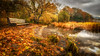 Autumn gold... (Einir Wyn Leigh) Tags: landscape autumn gold dof trail lake outside light bench trees leaf green water climate cold uk britain love nikon digital sigma november nature colours tranquil beauty