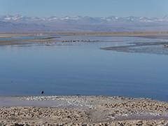 ChileAtacamaLagunas028 (tjabeljan) Tags: lagunas atacama salar salardeatacama toconao jeri chile chili andes