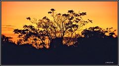 Cuando poco a poco, va llegando el otoño... (Jose Roldan Garcia) Tags: colores cielo contraluz contrastes naturaleza atardecer árboles libre luz libertad