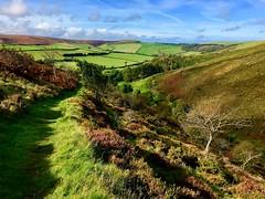 Deddy Combe (heathernewman) Tags: england uk devon valley combe autumn summer trees fields sunshine moorland exmoornationalpark nationalpark oare exmoor
