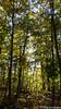 IMG_5703 (strolchi82) Tags: fellbach kappelberg herbst