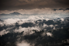 the lungs of the Earth (andreasbrink) Tags: drc landscape aereal virunga tropical forest clouds mist