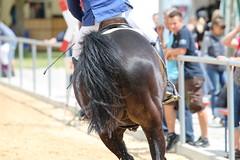 _MG_5964 (dreiwn) Tags: ridingarena reitturnier reiten reitplatz reitverein reitsport ridingclub equestrian showjumping springreiten horse horseback horseriding horseshow pferdesport pferd pony pferde tamronsp70200f28divcusd